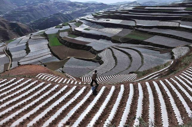 Cultivos en Terrazas SE Asia