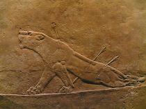 Leona herida.  Asiria, c. 900 a.C.