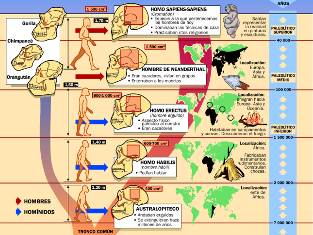 evolucion-humana-esquema
