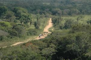 Bosque tropical en Bolivia