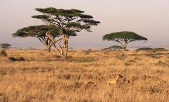 Sabana en África Oriental