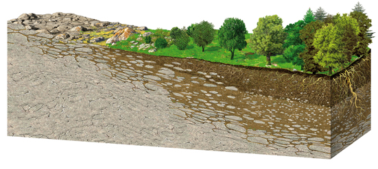 suelo evolución